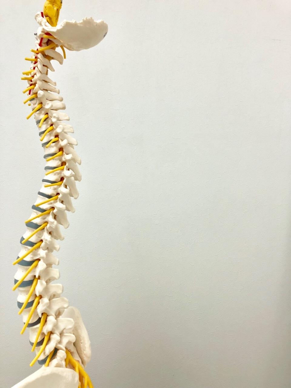 Spine Dynamics療法